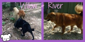 willowriver