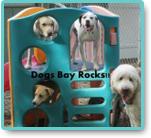 Dogsbay Daycare