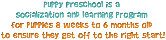Puppy Preschool is a socialization and learning program for puppies 8-16 weeks old to ensure they get off to the right start!