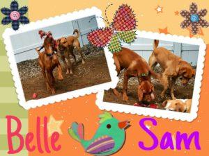 Bella & Sam